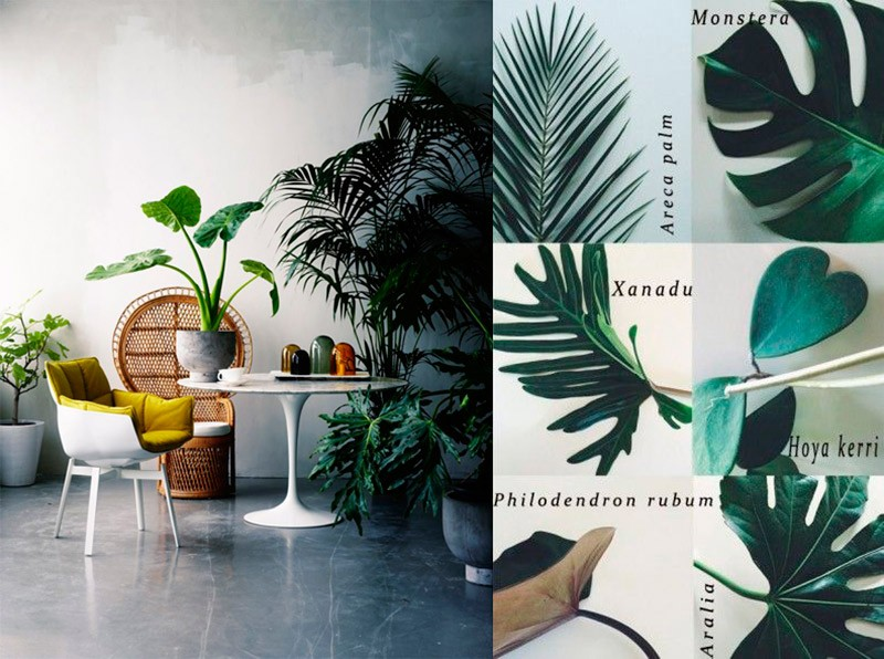 Decoración tropical hits: plantas tropicales para decorar. Interiorismo y Decoración Madrid R de Room