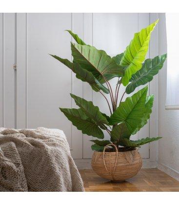 Planta artificial COLOCASIA (90cmx125cm)