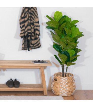 Planta artificial FICUS LYRATA (50cmx125cm)