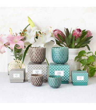 Vela aromática de orquídea en vaso cerámico grande